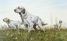 ENGLISH SETTER WORKING GUNDOG DOG FINE ART PRINT by Sandro Nardini (Italian)
