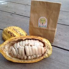 Cacao ,Theobroma cacao 1 Pods (Approx 40 seeds),Exotic Tropical RARE From Thai