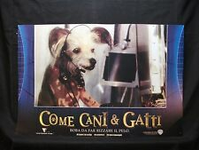 FOTOBUSTA CINEMA - COME CANI E GATTI - 2001- COMMEDIA - 02