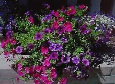 Petunias Easy Wave Mixed Colors -20+Seeds Ohio Grown,$2.00  Max Shipping