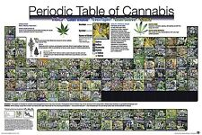 Periodic Table of Cannabis Pot Charts College Dorm Marijuana Weed Poster 24x36