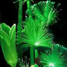 100Pcs Rare Emerald Fluorescent Flower Seeds, Night Light Emitting Plants