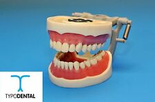 DENTAL TYPODONT MODEL 200 WITH REMOVABLE IVORINE TEETH KILGORE NISSIN TYPE