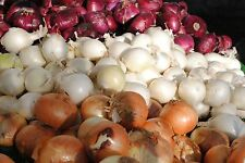 Potato Onions - Red, White, AND YELLOW MIX - Great Variety Mix - 51 bulbs / sets