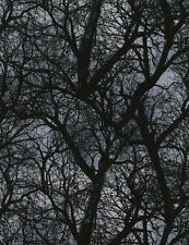 Fat Quarter Wicked Trees at Dusk 100% Cotton Quilting Fabric Black Grey C3760