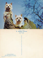 1970's TWO CAIRNS TERRIER DOGS UNUSED COLOUR POSTCARD