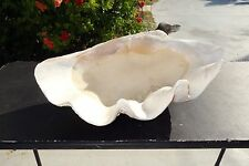 Antique Giant Clam shell Tridacna