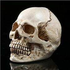 White Resin Replica Human Anatomy Skull Realistic Halloween Decor  XW