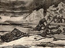 Antique print Arctic Polaris expedition 1878  dog north pole dogs holzstich hund