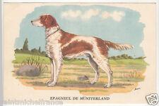 Épagneul de Munster Munsterlander CHIEN DE CHASSE HUNTING DOG IMAGE CARD