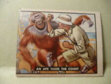 1950 Topps Bring Em Back Alive # 95 An Ape Takes The Count, Fighting Animals