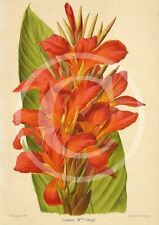 Canna Madame Crozy Photo, Heirloom Garden Flowers Bulbs French Revue Print WB#51