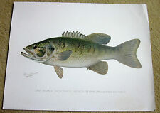 Denton FISH Print SMALL-MOUTHED BLACK BASS 12 inches by 9 3/8 Vintage Art