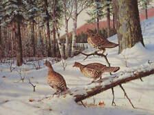 Ruffed Grouse, in Winter forest Owen Gromme 16 x 20