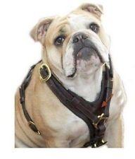 Genuine Buffalo leather Dog Harness Soft Padding - Unisex