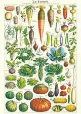 Jardin - Veggetables   Poster Cavallini & Co 20 x 28 Wrap