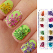Nagel Sticker DIY Maniküre Mini Echte Getrocknete Blumen Set Nail Art Dekoration