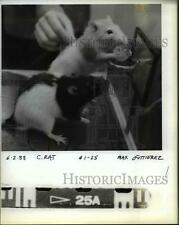 1988 Press Photo Rats part of the Science of Sports exhibit tat OMSI - orb30947
