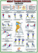Weight Training & Bodybuilding A2 Exercise Chart / Poster-Leg Muscles