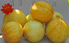 90 Semi di Cetriolo Limone GIALLO SOFFIONE ARANCIONE / Orto Verdure Piante