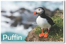 Puffin - NEW Animal Wildlife POSTER