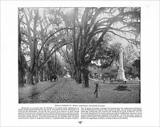 LIVING OAK SAVANNAH GEORGIA /  MARBLEHEAD MASSACHUSETTS 1897 PRINT