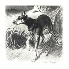 Doberman Pinscher - Morgan Dennis Dog Print - Matted
