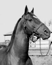 Champion Racehorse MAN O WAR Glossy 8x10 Photo Print Thoroughbred Poster