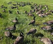 CANADA GOOSE (FLOCKING & ADHESIVE)1 FULL POUND LARGE 100 HEAD KIT. DUCK/DECOY