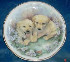Lovely Norfolk Fine China 6 1/2 Inch Plate Labrador Puppies
