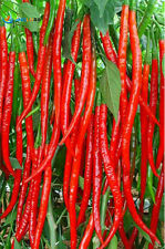 Garden Rare Giant Spices Red Spicy Chili Pepper Seeds , Long Chilly 50 seeds