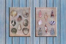 Shell print shell canvas nautical print seaside picture home decor/ 30cm x 40cm