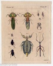 Insekten - Heuschrecken - Schaben - Bertuch-Kupferstich 1810