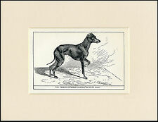 ENGLISH TOY TERRIER ANTIQUE 1900 WOOD BLOCK ENGRAVING DOG PRINT READY MOUNTED