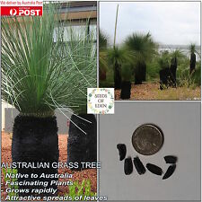 10 AUSTRALIAN GRASS TREE SEEDS(Xanthorrhoea preissii); Native Plant
