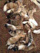 1 Fresh Taxidermy Tanned Bobcat Tail 5 to 6 Inches Long Super Soft