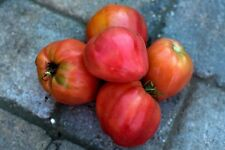 OEUF TORO Tomate divers Tomate ancienne 50 graines Graines