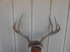 4x4 Whitetail Deer Rack Antlers mule mount taxidermy elk cape moose