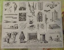 ART PRINT ON ORIGINAL ANTIQUE BOOK PAGE 1928 Apiculture Abeille Ruche Cellules