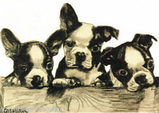 Late 1800s Drawing~Three Boston Terrier  Puppy~Dog Dogs~ NEW Large Note Cards
