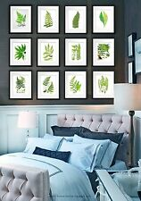 Set of 12 Fern Prints 5x7 size Green Antique Botanical art wall hanging