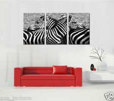 HD Canvas Print home decor painting picture wall art Zebra 3Pc(NO stretch)