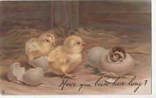 POSTCARD  ANIMALS  CHICKS  Have you been here long ?    Tuck