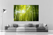 BAMBOU ZEN NATURE  Poster Grand format A0 Large Print