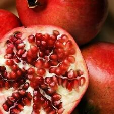 25 POMEGRANATE FRUIT TREE Punica Granatum Red Seeds *Comb S/H + Free Gift