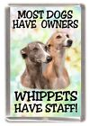 """Whippet Dog Fridge Magnet """"Whippets Have Staff!"""" by Starprint"""