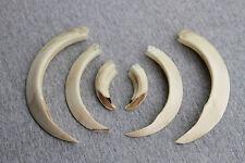 Wild boar, tusks,taxidermy,teeth,antlers,deer skull, handcraft