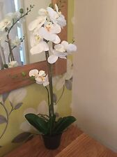 Phalaenopsis White Orchid In Black Pot .