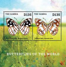 Gambia-2014-Fauna-Butterflies