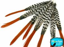Pheasant Feathers 4 Pieces Long Orange Tips Lady Amherst Feathers